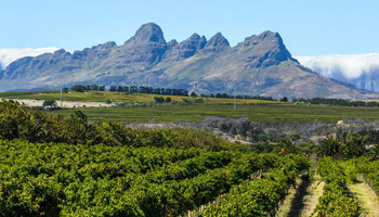 Full Day – Cape Winelands Tour